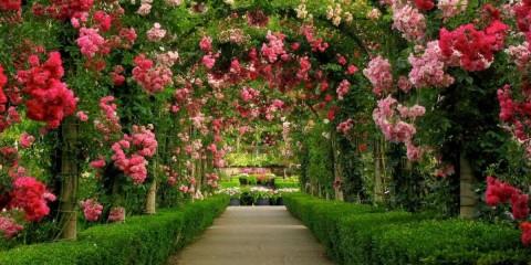 papel-de-parede-auto-adesivo-jardim-paisagem-natureza-9m2-12823-MLB20067172248_032014-F