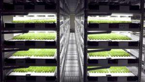 fazenda-vertical-produzira-30-mil-pes-alface-todos-os-dias